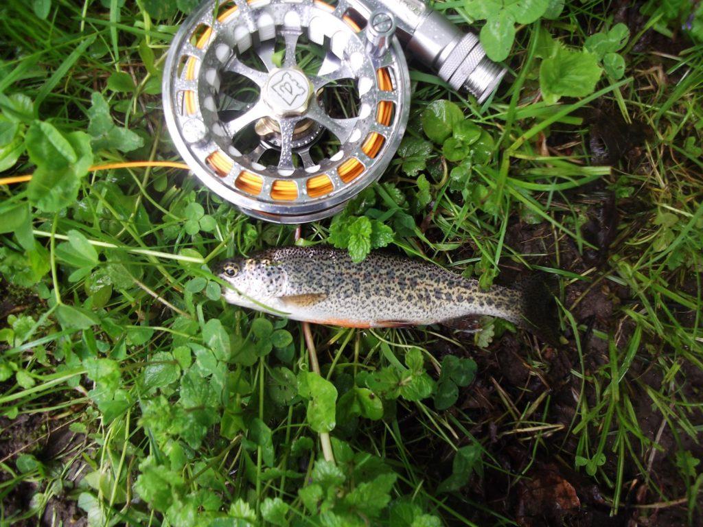 Pêche à la mouche - Meuse - Domaine de Sommedieue